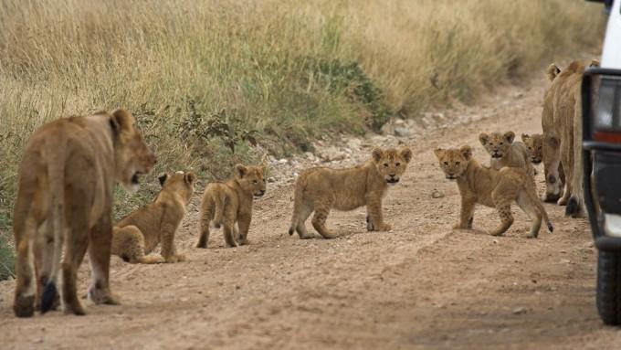 Comentarios viajeros en Tanzania