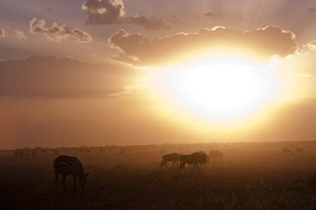 Consejos para realizar un safari en Tanzania