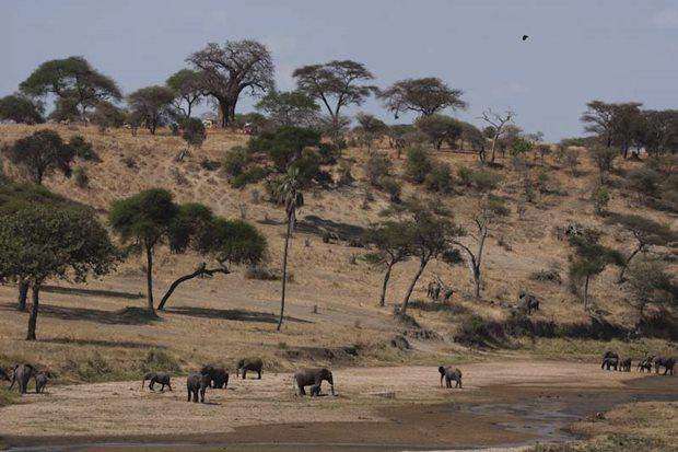 Cuando ir a Tanzania