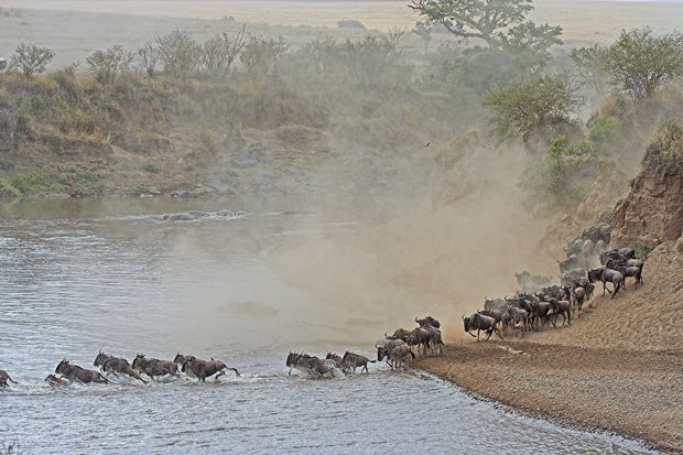 Gran-Migración-Serengeti-Mara