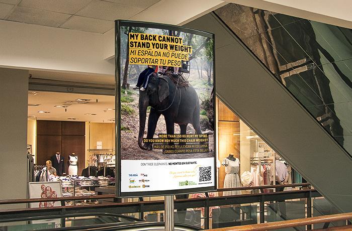 Itaka Safaris-Faada-campaña-elefantes