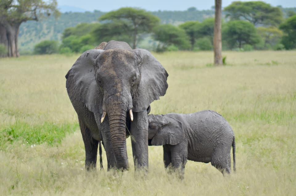 Safaris en Tanzania_viajeros