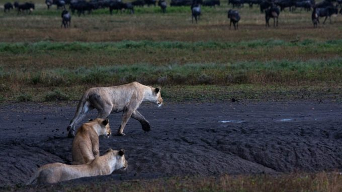 Safaris en Tanzania_Ndutu