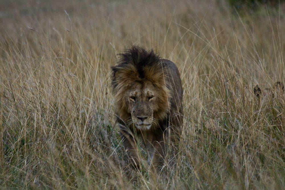 Negocio de la caza en África