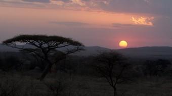 Safari en Tanzania ¡Ven a África!