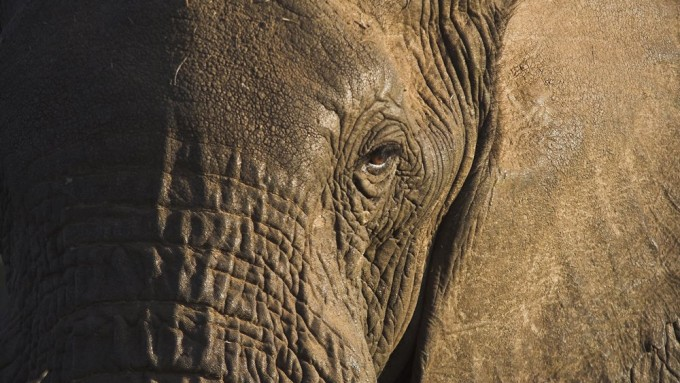 Safari en Tanzania Esencial