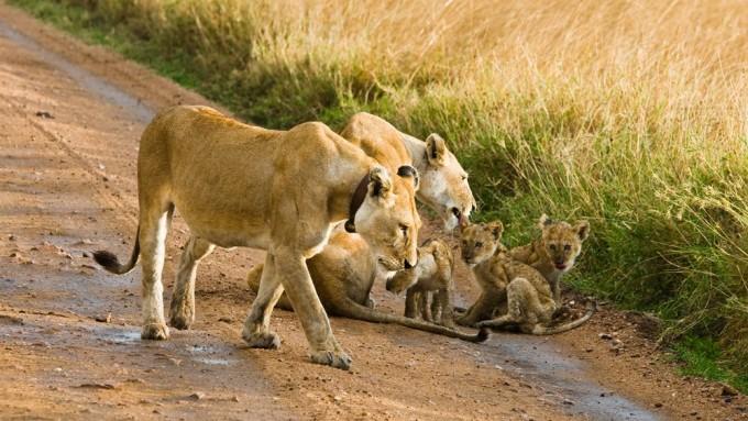 Safari en tanzania- ecoturismo
