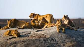 Safaris en Tanzania en grupo regular