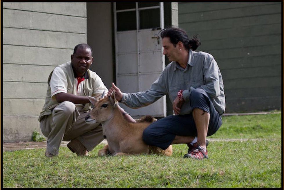Safaris en Tanzania- Ángel