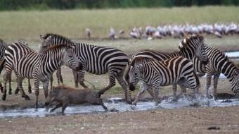 Safaris en Tanzania Combinados