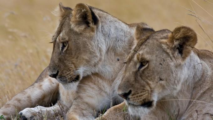 Safaris en Tanzania en grup