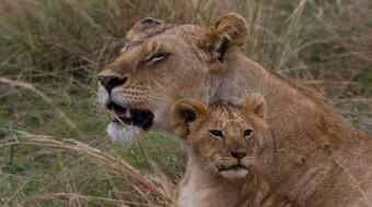 Safaris en Tanzania Esenciales