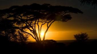 Safaris en Tanzania a Medida