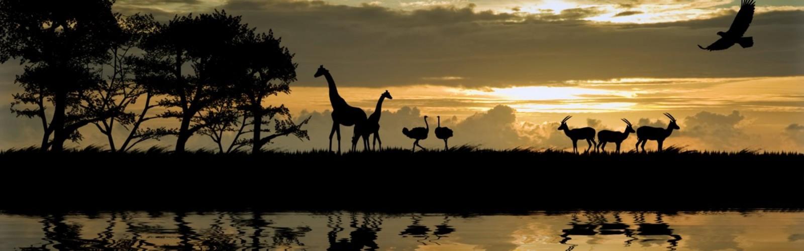 Safaris en Tanzania de Ecoturismo