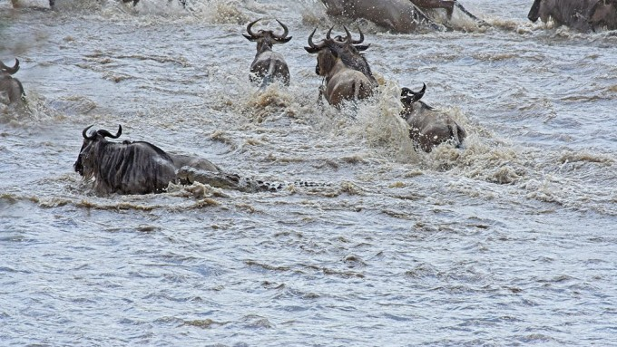 Safari en Tanzania para Fotógrafos. La Gran Migración