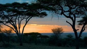 Safaris en Tanzania Norte