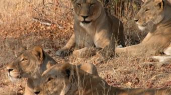 Safari en Tanzania Sur – Gran Sabana Africana