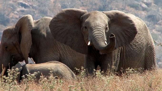 Safari en Tanzania Sur