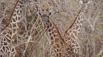 Safari en Tanzania Sur – El Inmenso Sur