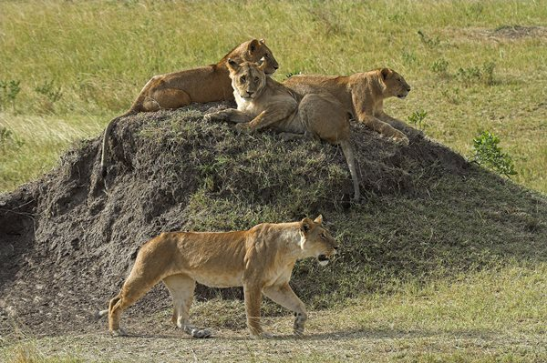 Serengeti- Safaris en Tanzania
