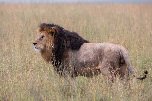 Viajes para fotógrafos- Safaris en Tanzania