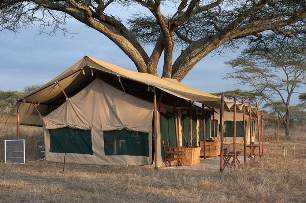 ir de Safari a Tanzania