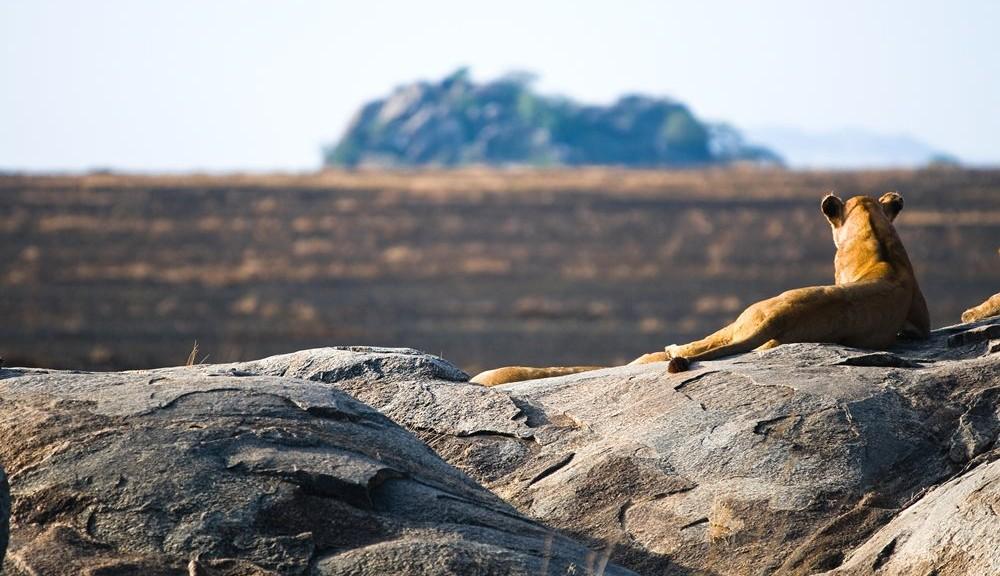 Nueva Web de Itaka Safaris - Tanzania