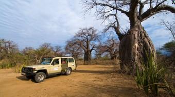 Cómo ir de Safari a Tanzania