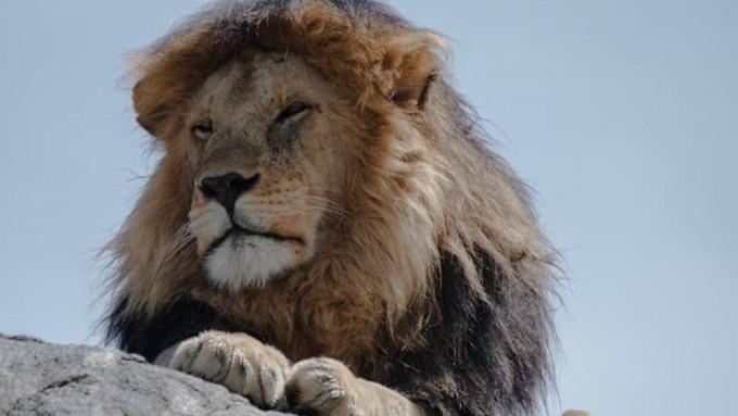 Safari en Tanzania para Fotógrafos