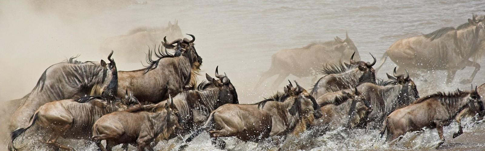 Safaris en Tanzania para Fotógrafos